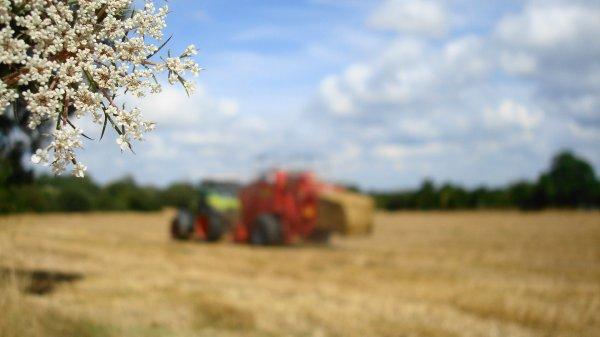 Pressage de paille le Samedi 4 Août 2012 ( CLAAS & MF ) .... Axel