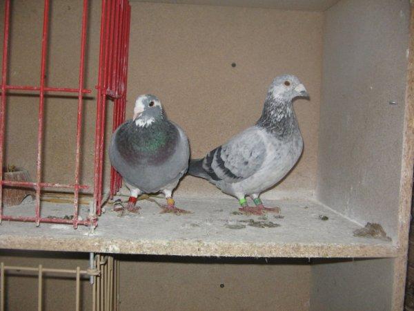 mon male /103121/ et ma femelle /474849/