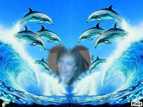 l'océan et les dauphins * un rêve *