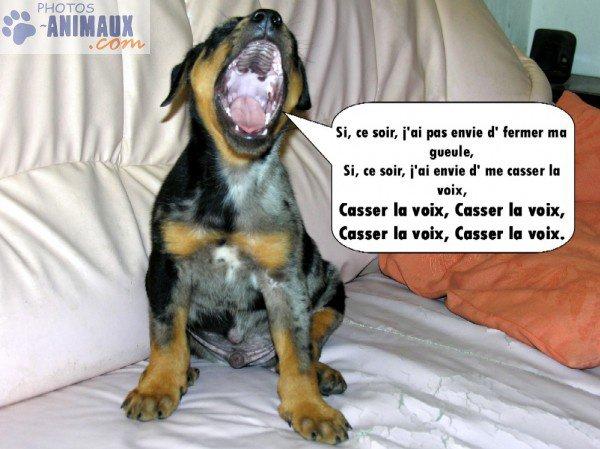 "chien ""qui chante"""