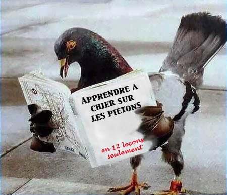 pigeon qui lis
