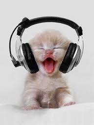 chat qui ecoute de la musique