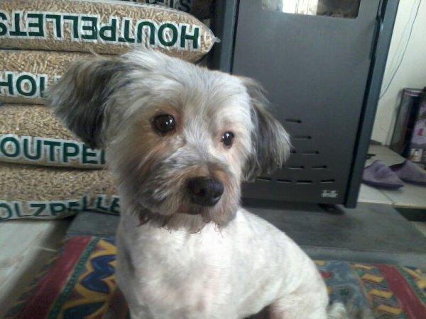 le changement de mon chien!!!!:O