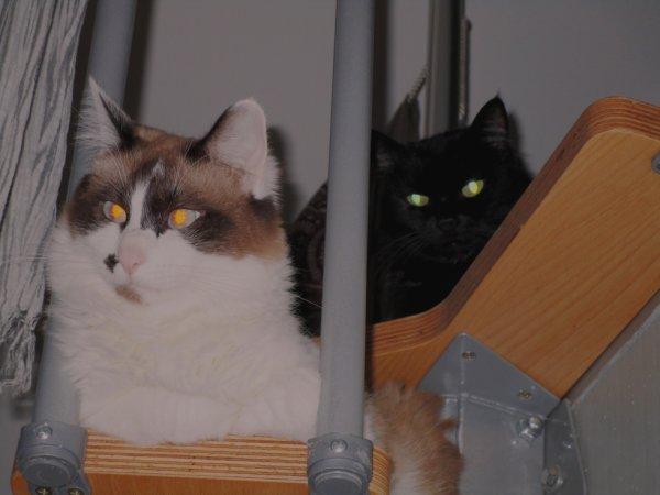 Icarus et Ilona les chats de mon petit-ami