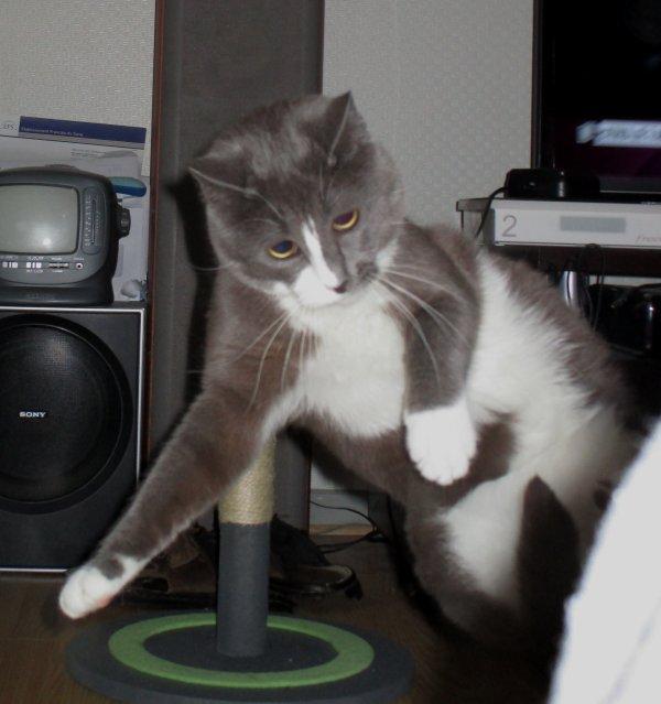 Les chats qui jouent !!