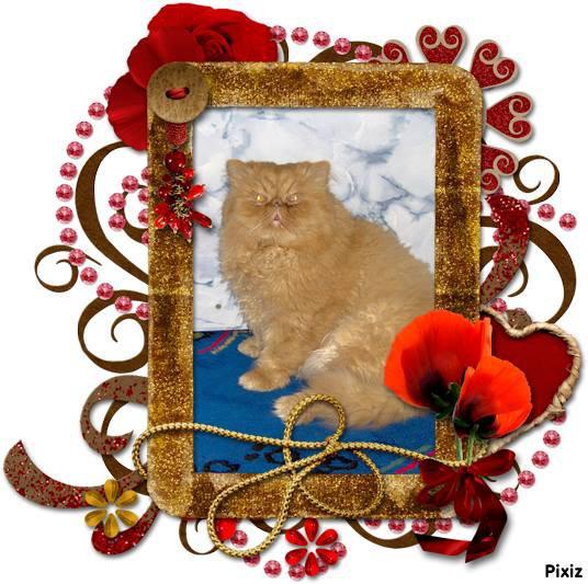 souvenir de mon sunny qui et au paradie des chat cela va fair 2ans !! marilyne