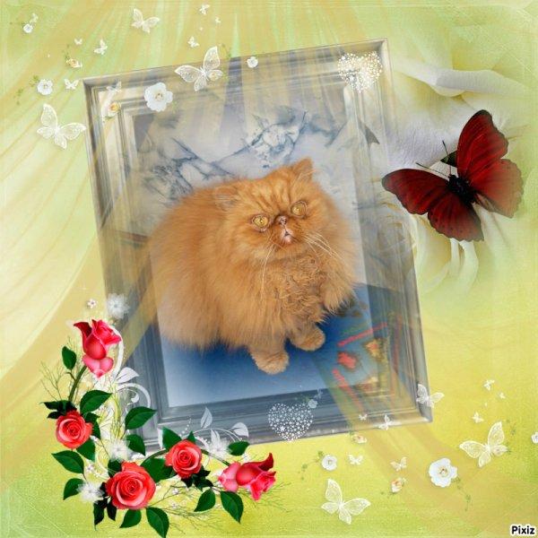 pour toi mon sunny cela va fair demain le 17 06 2015 que tu ma quitter tu repose en paix au paradis des chats comme tu me manque tu etait toute ma vie jamais je toublirais  je taime mon bèbè !! marilyne