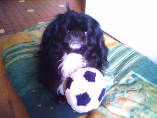triste histoir pour moi !!!en homage a ce petit chien qui et plus de ce monde !!! sont maitre en photo michel de lyon !!!! que jamais joublirais faute dun foux !! qui pratique le mal !!! marilyne