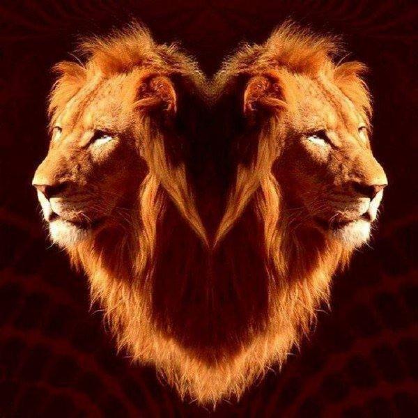 je suis lion !!! marilyne