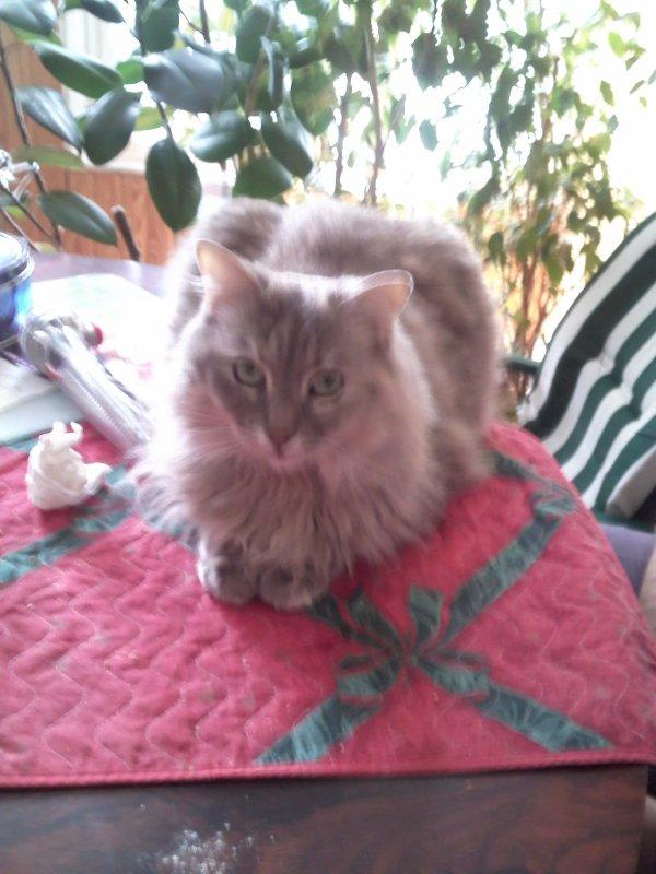 mon peti chat !!!!!