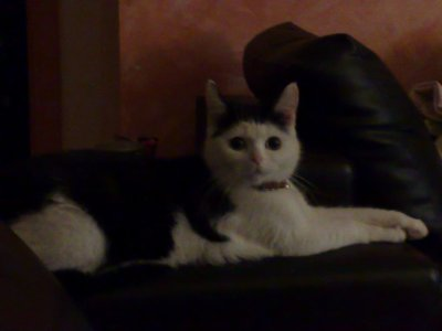 ma chatte :p