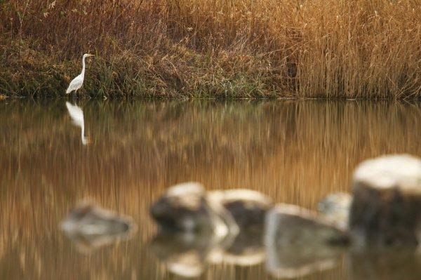 Affût au bord d'un étang