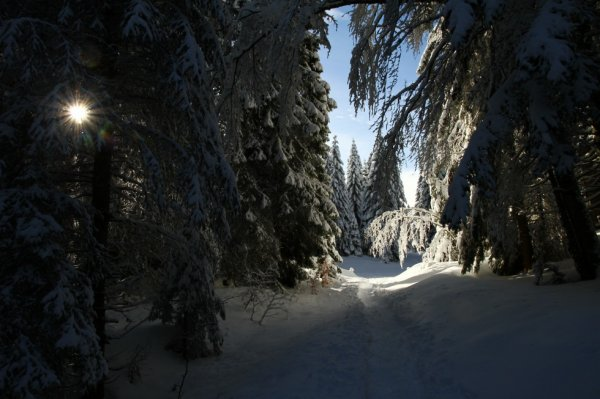Promenade à la montagne