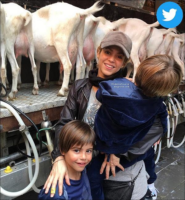 🐑 Shak, Milan & Sasha ont visité la « Ferme Ridammerhoeve » avant de partir à Londres. 1o Juin 2o18 - Amsterdam, Pays-Bas.