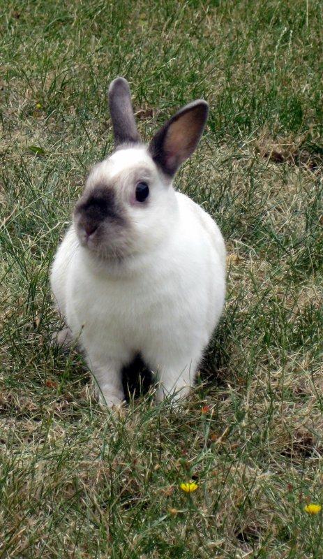 A mon petit lapin.