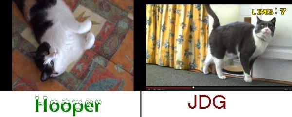 Le chat du Hooper et le chat du JDG sont-ils les même?