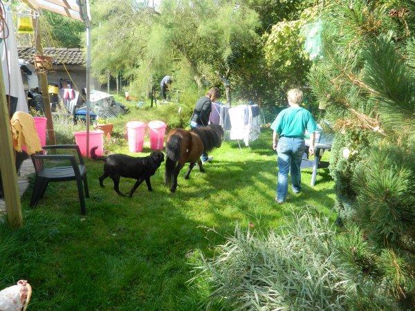 Un poney dans mon jardin