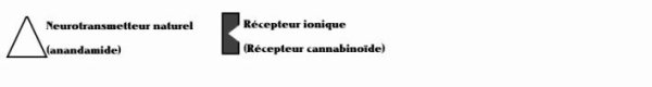 Travail de Sciences:Le cannabis