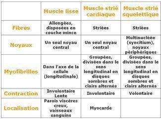 [Aide Anatomie]Les 3 genres de muscles