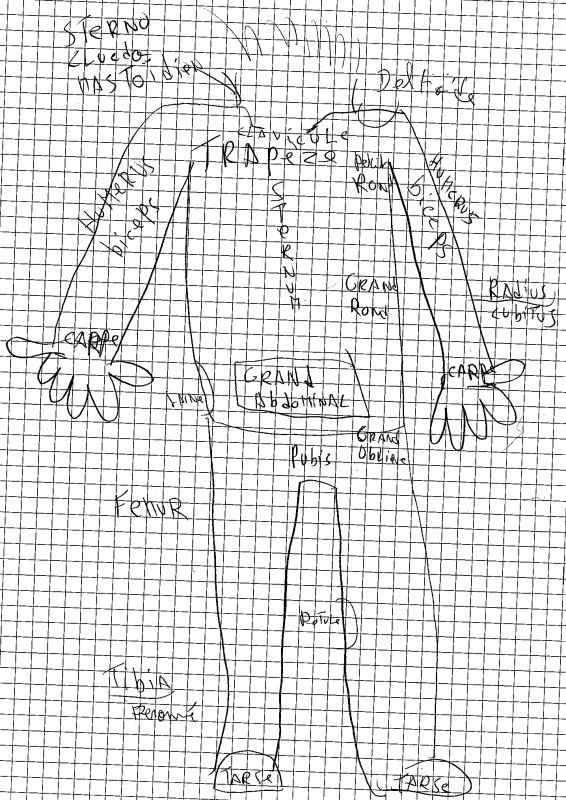 [Aide Anatomie]Les muscles et os de l'abdomen et du dos