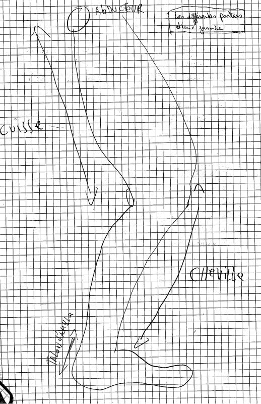 [Aide Anatomie]La cuisse, la jambe et le pied!