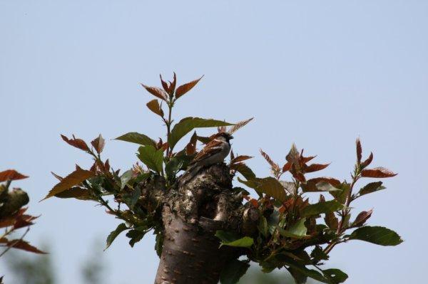 Cherchez l'oiseau