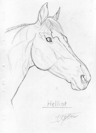 O Helliot n°1 O o °