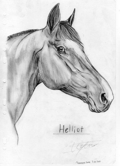 O Helliot n°2 O o °