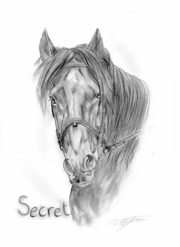 O Secret du Javesnon O o °