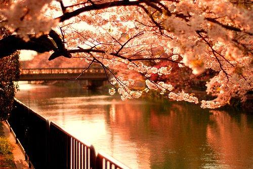 Aucun mot, aucun geste, aucune pensée ne peut guérir une âme en deuil.