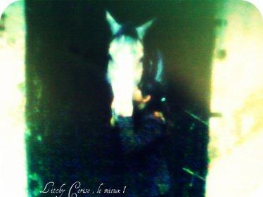 Je me dis souvent que j'ai eu tellement de chance de l'avoir connu, sinon j'aurais jamais su qu'un cheval aurai pu enchanter mes journées. Merci . ♥