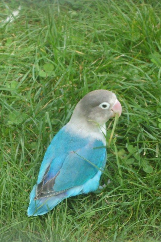 les oiseaux du thabor