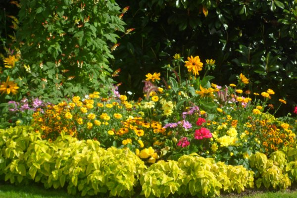 les fleurs du thabor