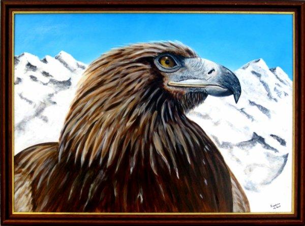 Aigle des montagnes
