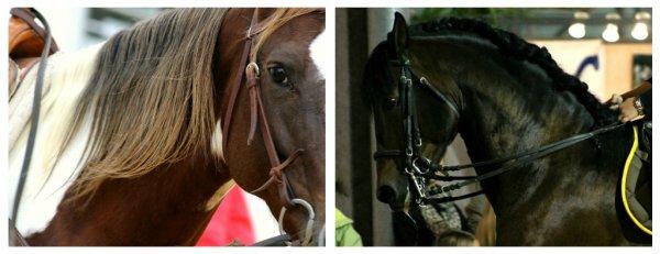 Salon du cheval de montpellier oscar manon - Salon du cheval montpellier ...