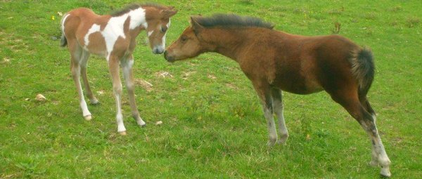Baby & Noémie ♥.