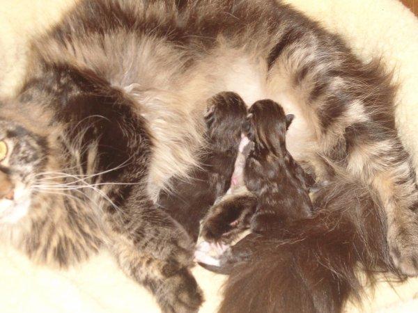 Les chatons de Guess et Guss