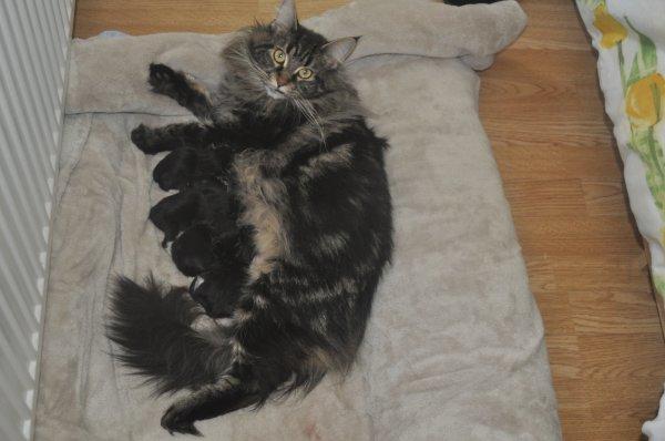les 6 chatons de Guess