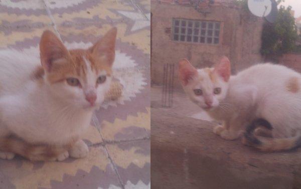 mes 2 chats qui ont dècèdè ce matin