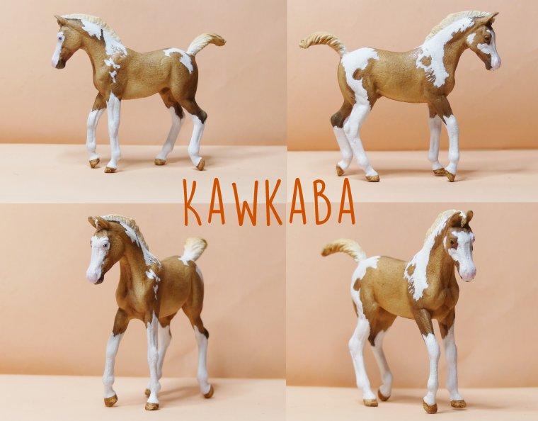 Kawkaba