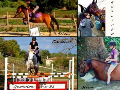Quotation-horse-38