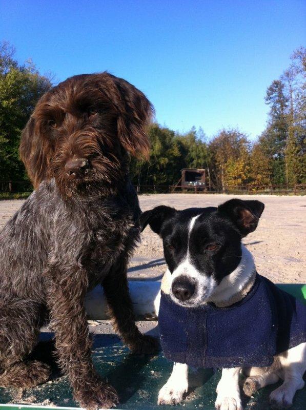 dur de faire confiance a l'etre humain meme les aveugles preferent se faire guider par des chiens...