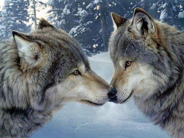 L'amour et l'amitié réside au sein d'une meute