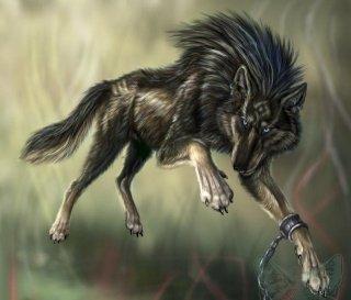 Rex le loup en balade