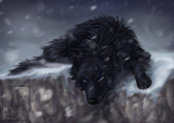 Rex le loup au bord de la falaise d'hiver