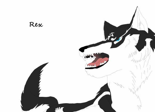 Rex : toujours sur ses gardes
