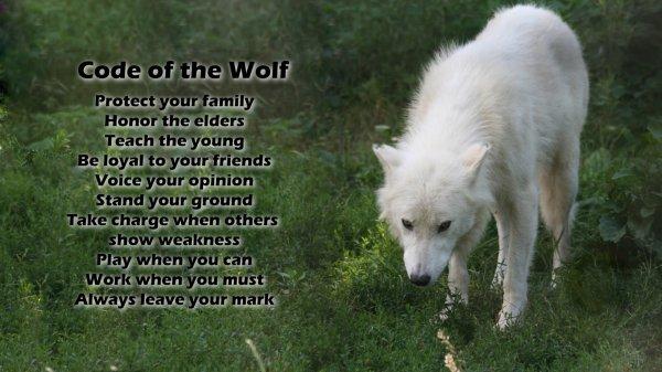 Le code du loup
