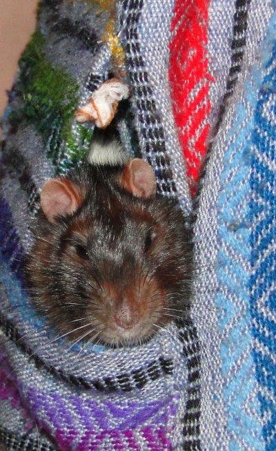 mon raton