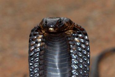 Blog de snake81