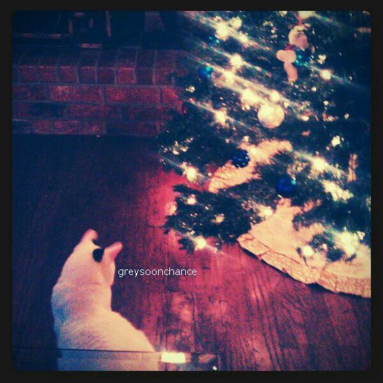 26/11/2011| Voici une nouvelle photo, le chat de Greyson nommé Oréo Hyper chou ce matou, enfin lui qui est déjà préparer pour Noel!